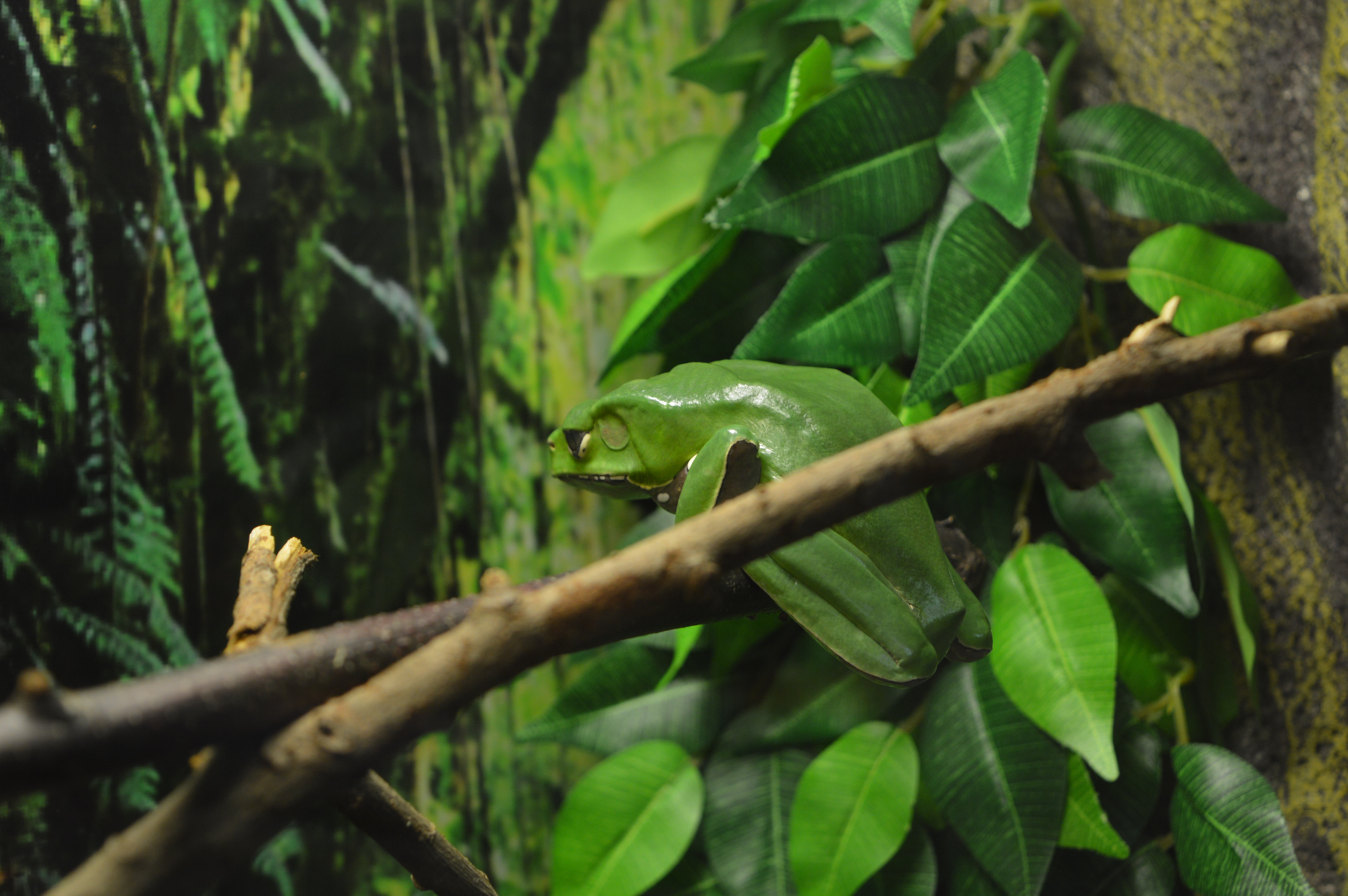 Tree Frog in Bug World at Alcorn's Tropical World, Donegal