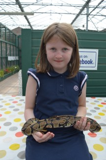 Lily-Belle holds Hercules the royal python at Alcorn's Tropical World in Letterkenny, Ireland