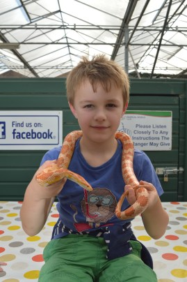 Angus holds Sasha the corn snakes at Alcorn's Tropical World in Letterkenny, Ireland