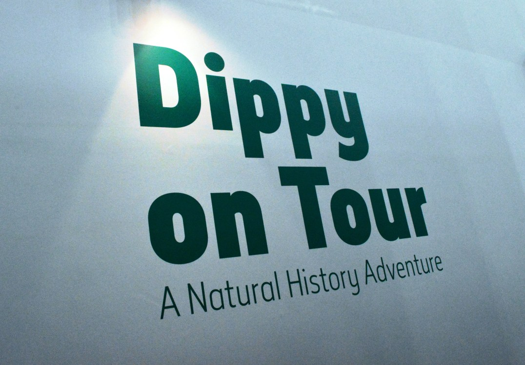 Dippy On Tour Exhibition at the Ulster Museum in Belfast