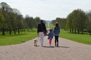 The Long walk in Windsor Great Park