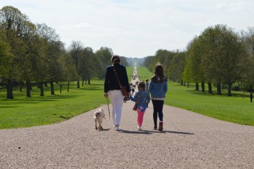 The Long walk in Windsor Great Park
