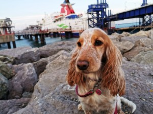 Rosie waiting to board the Stena Superfast X