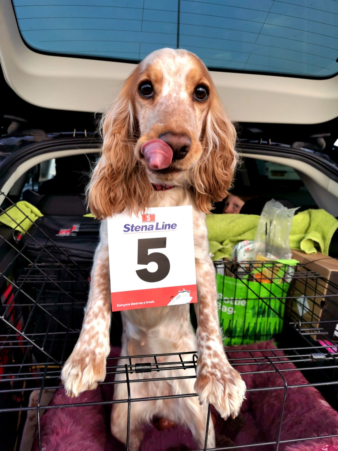 Rosie ready to board the Stena Line Superfast X ferry