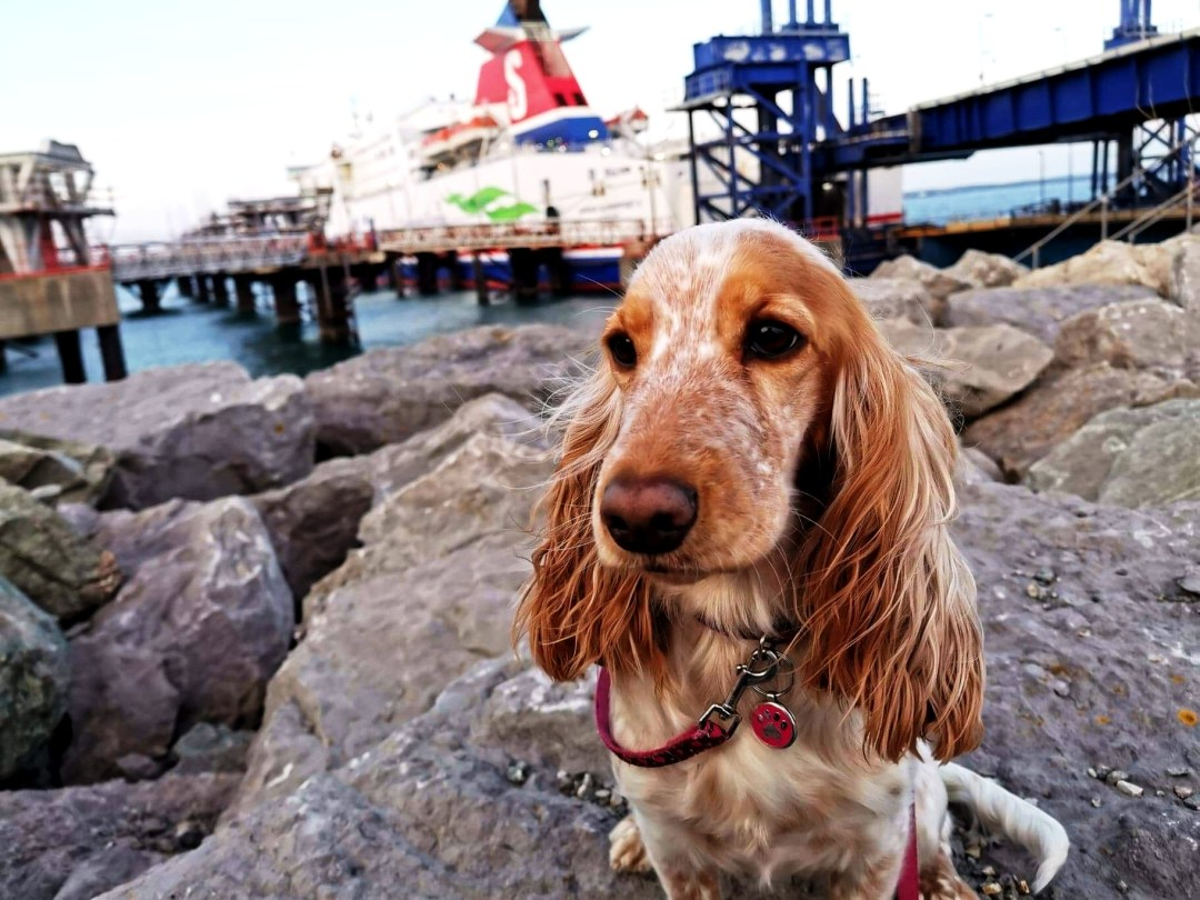 Rosie and the Stena Line Superfast X Ferry