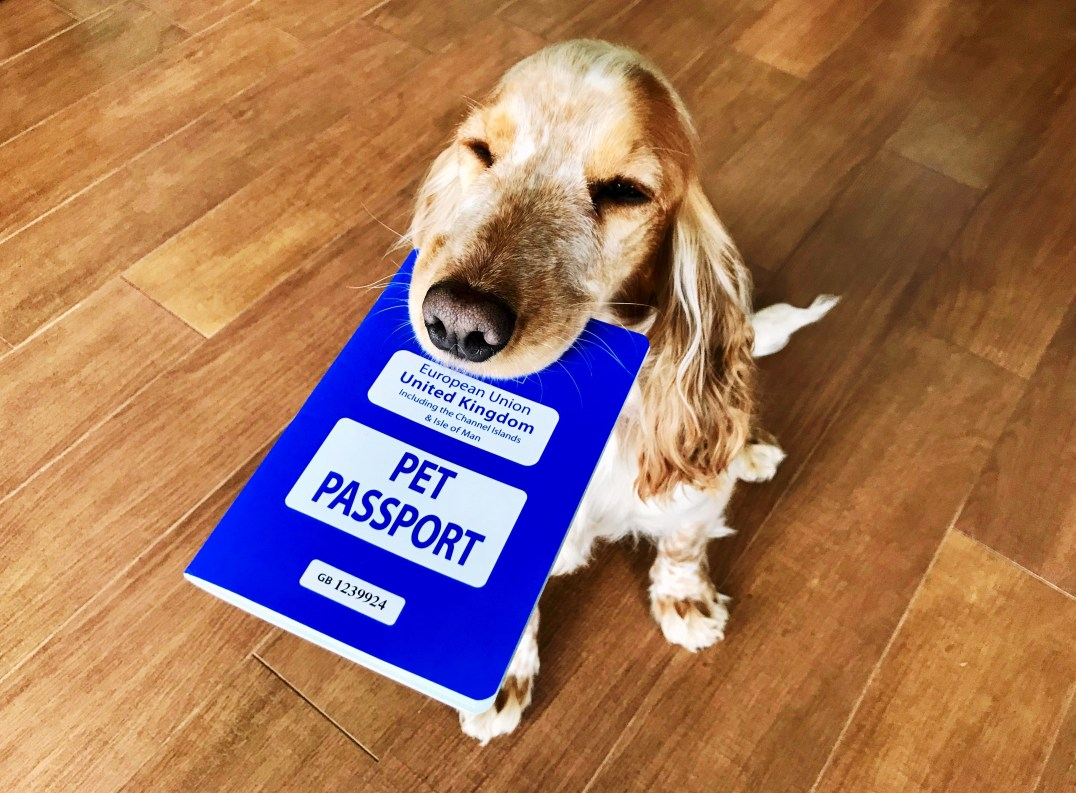 A Pet Passport is essential when travelling abroad with your dog