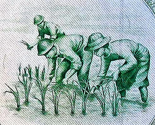 closeup detail from Myanmar 90 Kyats Banknote , featuring workers in rice paddies