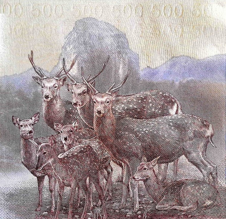 closeup detail from Taiwan 500 Yuan Banknote back, featuring formosan sika deer