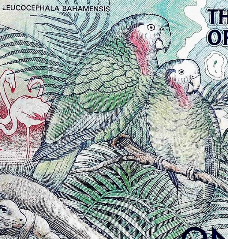 closeup detail of The Bahamas 1 Dollar Quincentennial Banknote, Year 1992 back, featuring parrots