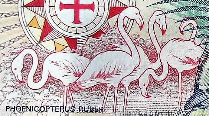 closeup detail of The Bahamas 1 Dollar Quincentennial Banknote, Year 1992 back, featuring flamingos