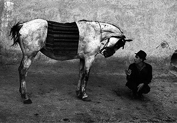 horse and his rider