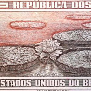 Brazil 5 banknote back featuring water lily pads and bloom
