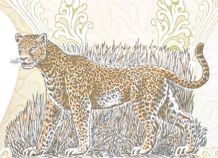 closeup of cheetah detail on Nepal 2 Rupees Banknote, back
