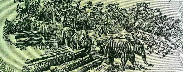closeup of elephants featured on Laos 5 kips banknote, year 1979 back