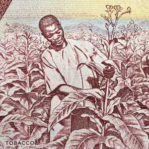 Malawi 1 Kwacha 1992 banknote back (2) featuring workers harvesting tobacco