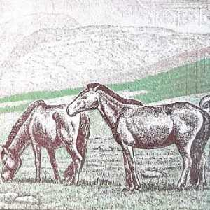 Mongolia 10 Togrog 2013 banknote back (2), featuring 2 horses