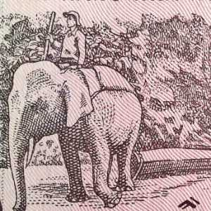 Vietnam 1000 Dong 1988 banknote back (2), featuring elephant logging