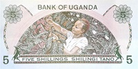 Uganda 5 Shilling banknote back featuring woman harvesting coffee beans
