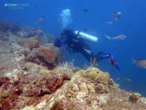 coral dive tayrona