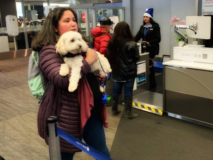 Woman carrying small white dog in the airport