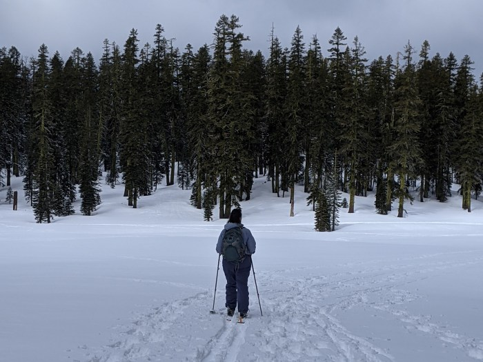 Woman out in a field of snow with evergreens in the distance