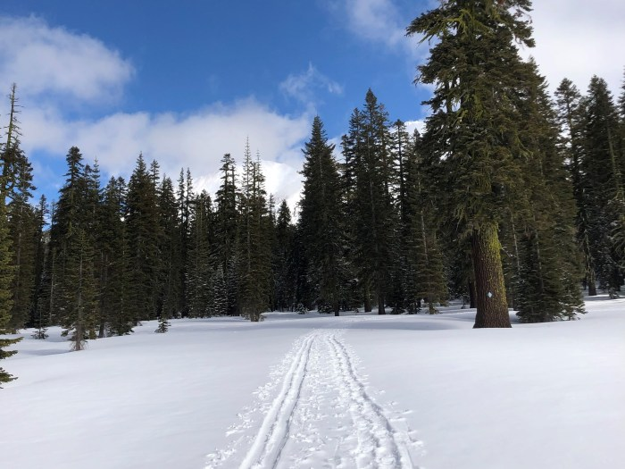 Field of snow with a cross country ski trail, and evergreen trees and mountains in the distance
