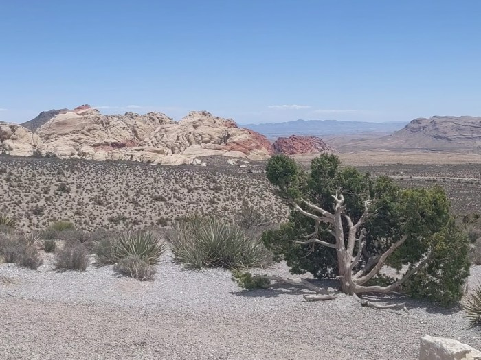 Sandstone quarry in the distance, with dessert shrubs in front