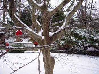 Red BirdHouse in Tree