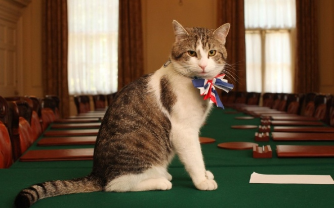 larry-the-downing-street-cat-735x459.jpg