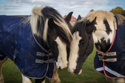 20151022-bransby-horses-002