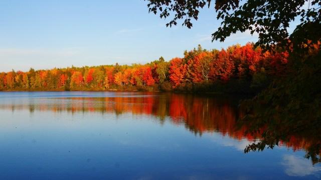 nouveau-brunswick canada feuilles automne blog voyage arpenter le chemin