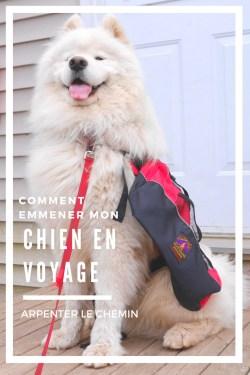 voyager avec un chien blog voyage arpenter le chemin