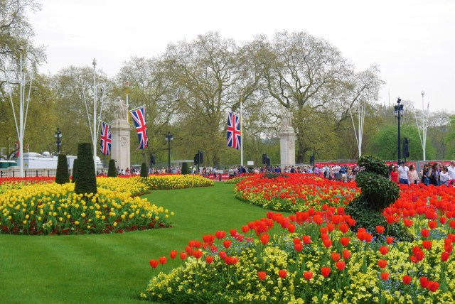 Buckingham Palace tulipes Londres Arpenter le chemin