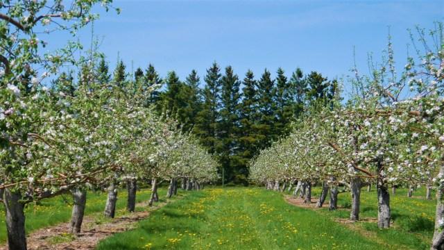 verger belliveau nouveau-brunswick tourisme pommes cidre blog voyage arpenter le chemin
