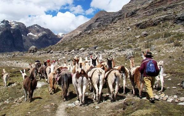 Abren circuito Qhapaq Ñan a visitantes