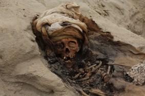 Investigaciones preliminares dieron cuenta de que los restos habrían sido sacrificados debido a las huellas encontradas en sus cuerpos, presentan cortes en los laterales del tórax. Foto: Cortesía/ Luis Puell