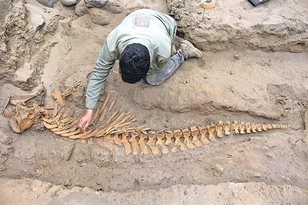 La Ofrenda de los Moches:  Monstruos marinos en Huanchaco