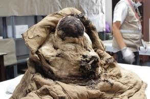 El fardo funerario del entierro 14 fue hallado en 2018 durante las investigaciones en Huaca Las Abejas del Complejo Arqueológico de Túcume.