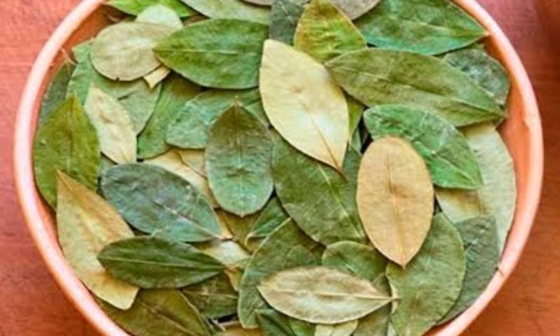 Las Plantas de Poder en Tiempos Precolombinos