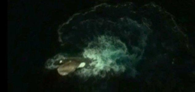 kraken-foto-google