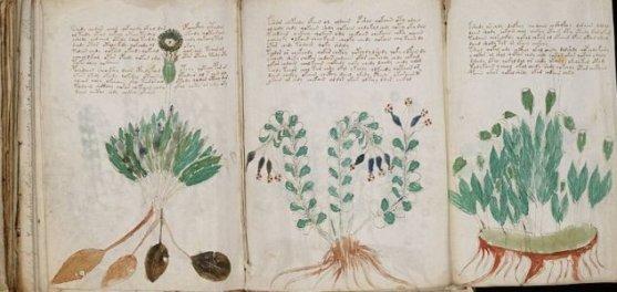 manuscrito-voynich