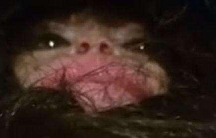 filhote-pe-grande