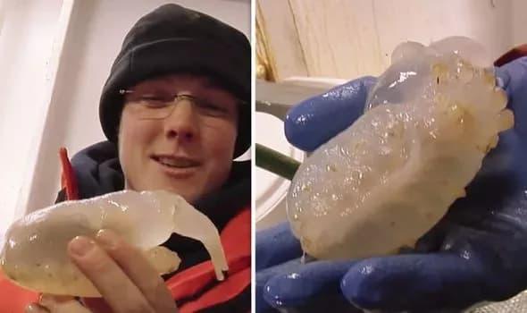 criatura-antarctica
