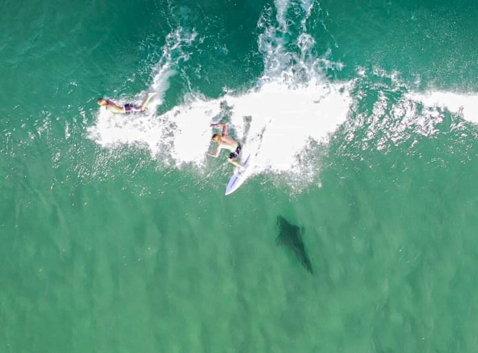 Pippi Beach shark