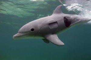 Dolphin-Spy-Baby-Underwater-Robots