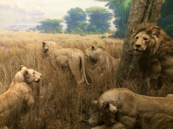 African Spectacle Dioramas Of York American