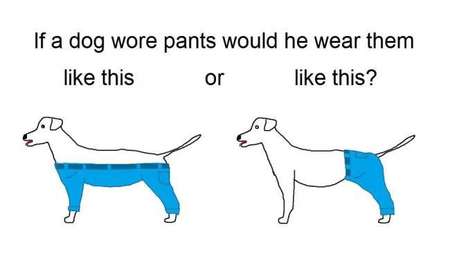 dogpants