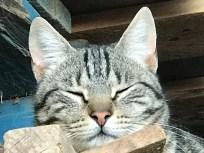 Finalmente pude realizar diversas capturas e incluso se permitió relajarse con un breve sueño.