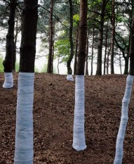 Zander Olsen_Tree, Line_006