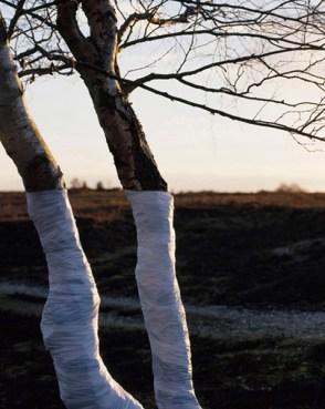 Zander Olsen_Tree, Line_007